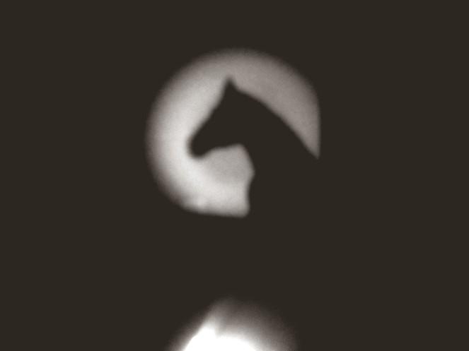 {work trip wednesdays} dad&dinosaur - shadows2
