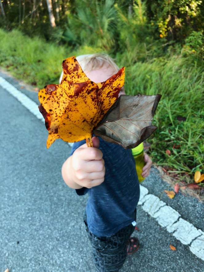 {five things to do in the fall} collecting leafs