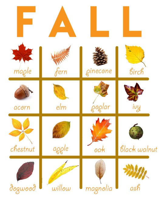 {five things to do in the fall} fall bingo image